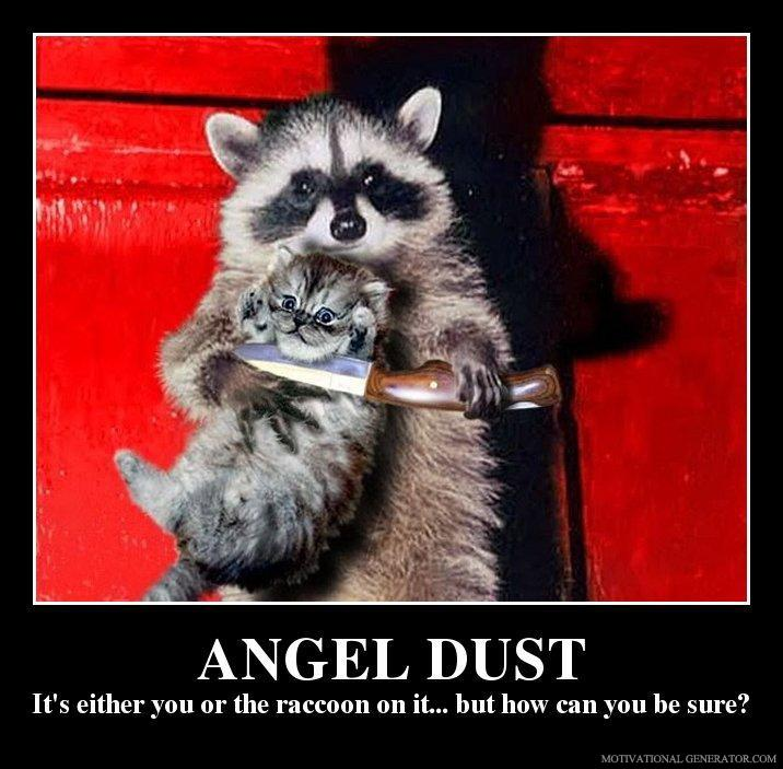 Angel-dust-it-s-either-you-or-the-raccoon-on-it-but-how-can-you-be-sure-fdb27c