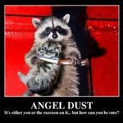 Angel dust it s either you or the raccoon on it but how can you be sure fdb27c