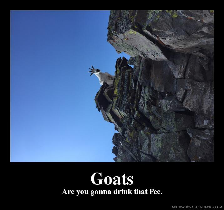Goats are you gonna drink that pee 6aae0e